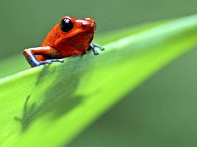 Life Frog